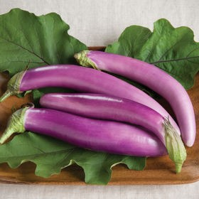 brinjal purple